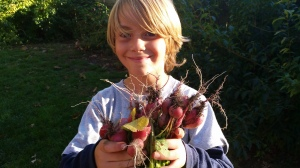 Surprise! An unexpected bounty of radishes